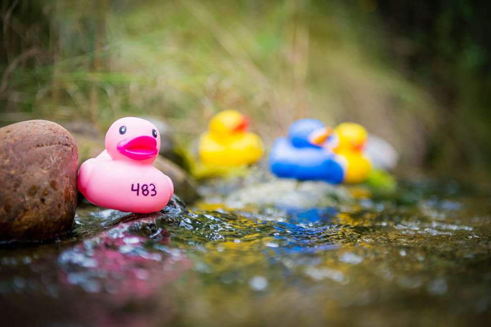 Balfour-Harrop Rescue Society's Rubber Duck Race
