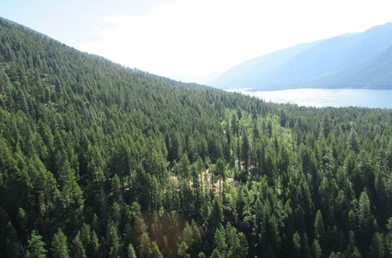 Work continues on Kokanee Mountain Zipline project
